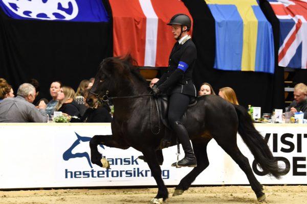 MCK4284 Gröndal stallions show 220220