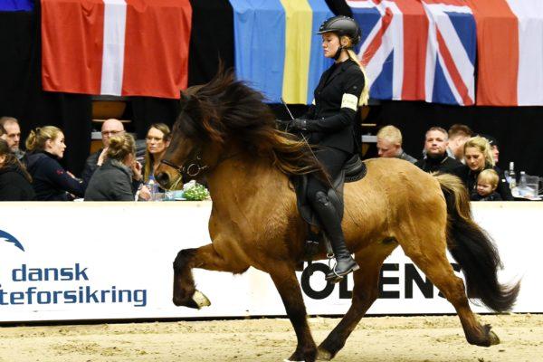 MCK4315 Vökull stallion show 220220