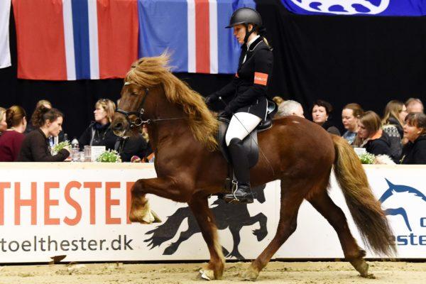 MCK4322 Fálinn stallion show 220220