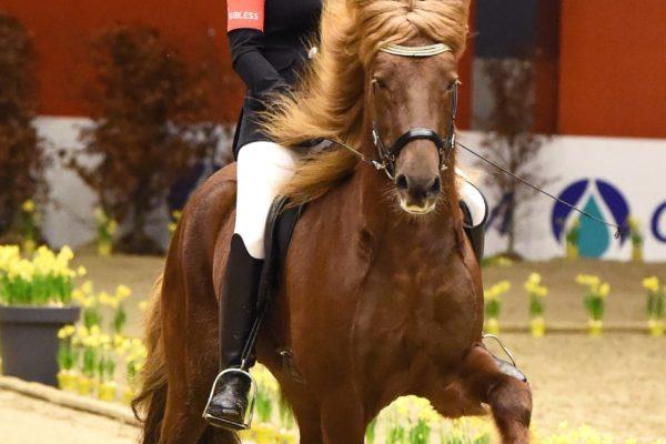 MCK4352 Fálinn stallion show 220220