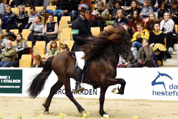MCK4392 Fönix stallion show 220220