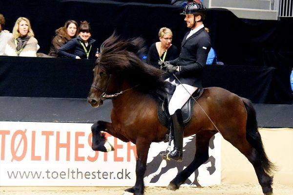 MCK0205 Pistill and Nils 4-gait stallion show 240218