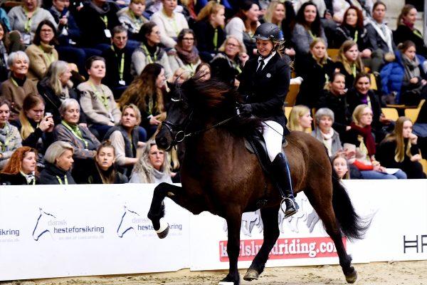 MCK0221 Bikar and Lena 240218 stallion show