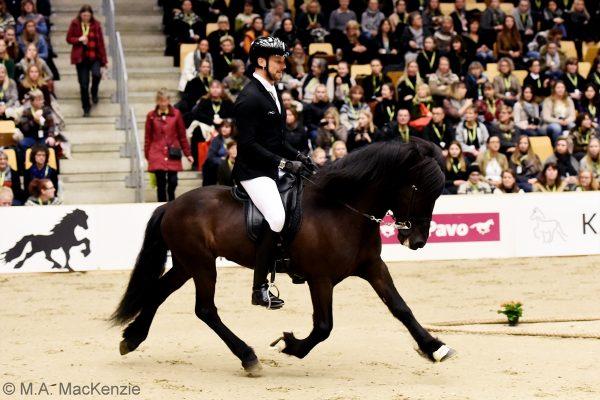 MCK0254 Pistill and Nils 240218 stallion show