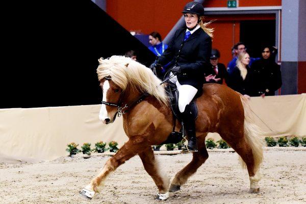 MCK0495 Sjarmi and Tanja 240218 stallion show