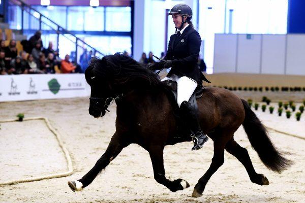 MCK0524 Bikar and Lena 240218 stallion show