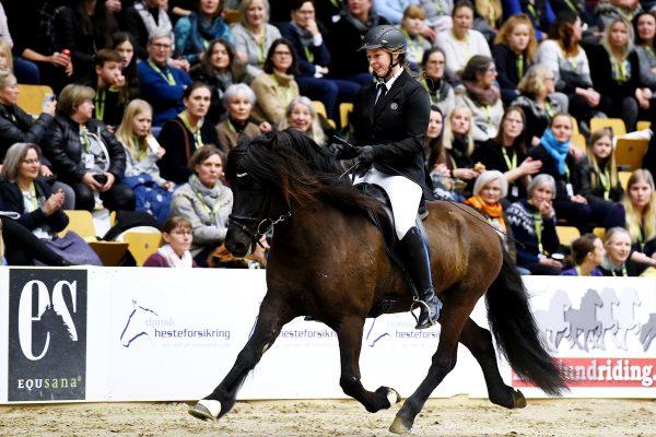 MCK0556 Bikar and Lena 240218 stallion show