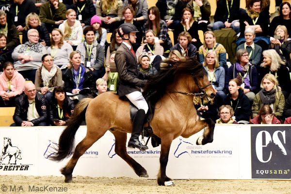 MCK0688 Muni and Dennis 240218 stallion show