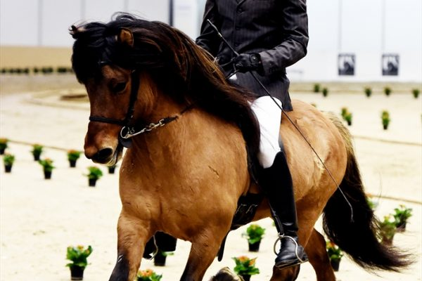 MCK0721 Muni and Dennis 240218 stallion show