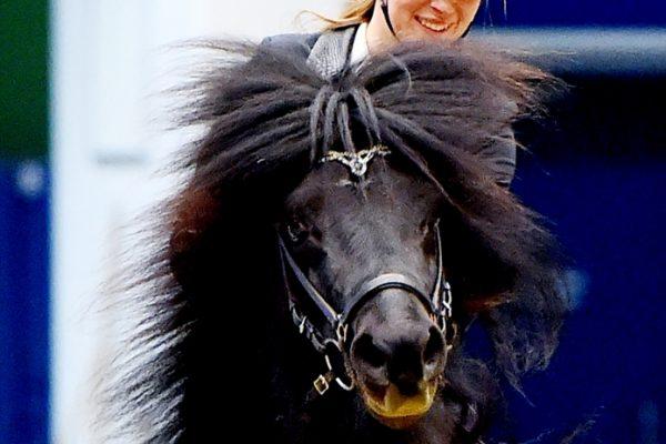 MCK0816 Levi and Alberte 240218 stallion show