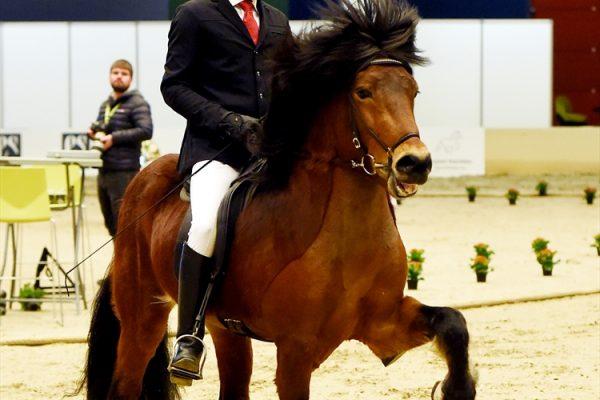 MCK0940 Thór-Steinn and Jóhann 240218 stallion show