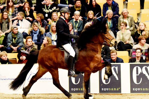 MCK0956 Thór-Steinn and Jóhann 240218 stallion show