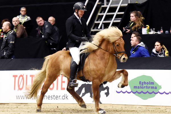 MCK1019 Gustur and Soren 240218 stallion show