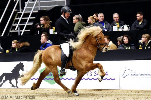 MCK1022 Gustur and Soren 240218 stallion show