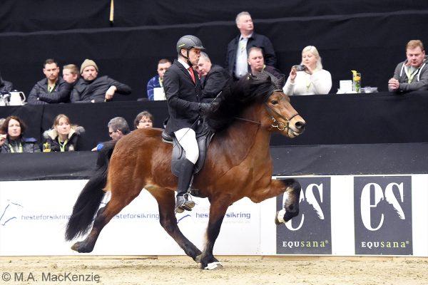 MCK1087 Thór-Steinn and Jóhann 240218 stallions show