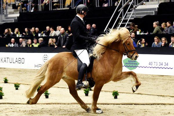 MCK1221 Gustur and Soren 240218 stallion show