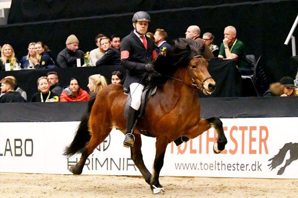 MCK1704 Thór-Steinn and Jóhann 4-gait stallion show 240218