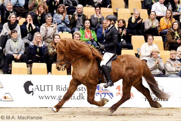 MCK1839 Jarl and Steffi 4-gait stallion show 240218