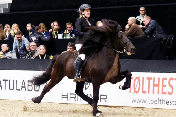 MCK2172 Divar and Julie 5-gait stallion show 240218
