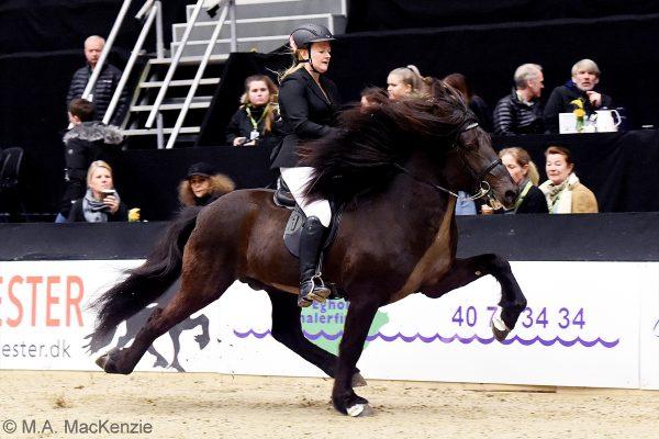 MCK2177 Divar and Julie 5-gait stallion show 240218