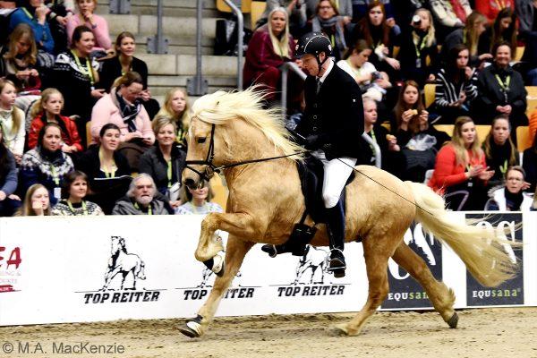 MCK2296 Skinfaxi and Soren 5-gait stallion show 240218