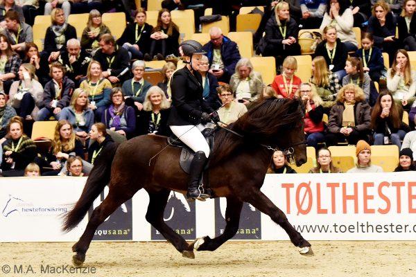 MCK2319 Divar and Julie 5-gait stallion show 240218