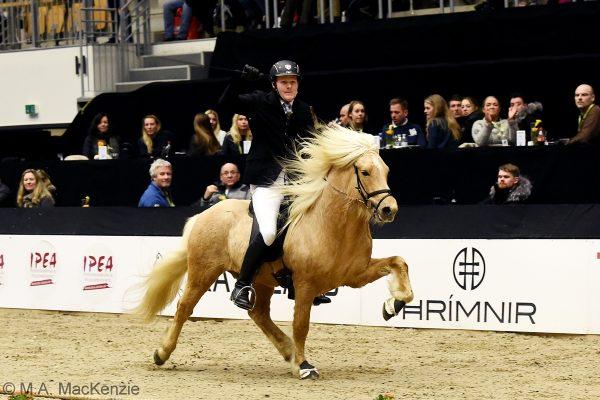 MCK2346 Skinfaxi and Soren 5-gait stallion show 240218