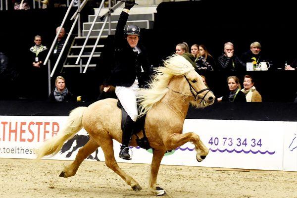 MCK2353 Skinfaxi and Soren 5-gait stallion show 240218