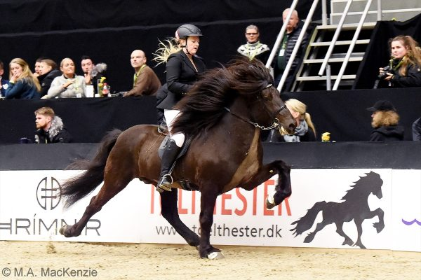 MCK2385 Divar and Julie 5-gait stallion show 240218