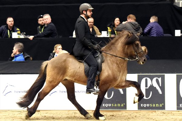 MCK2553 Prúdur and Agnar Stallion show WT240218