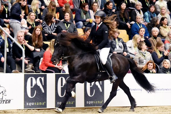 MCK2573 Romeo and Cecilie 5-gait stallion show 240218