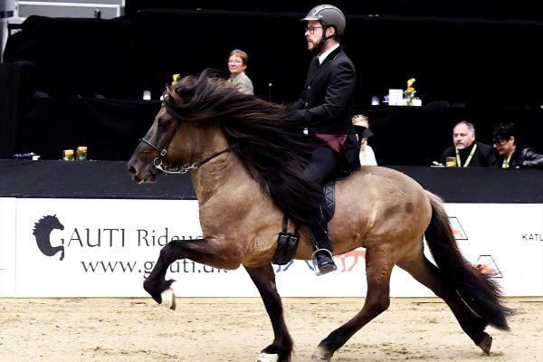 MCK2596 Prúdur and Agnar 5-gait stallion show 240218