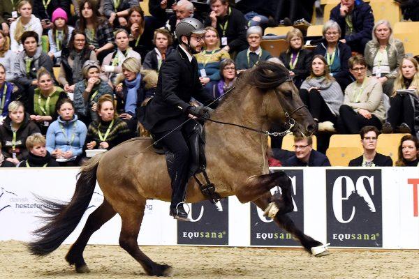 MCK2678 Prúdur and Agnar 5-gait stallion show 240218