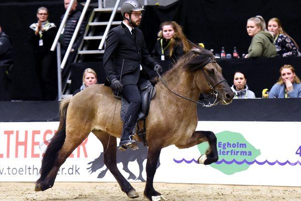 MCK2696 Prúdur and Agnar 5-gait stallion show 240218