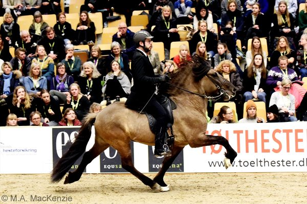 MCK2713 Prúdur and Agnar Stallion show WT240218