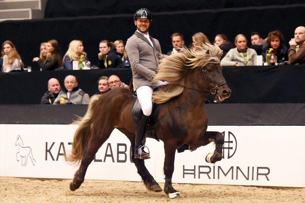 MCK2994 Gigur and Nils 5-gait stallion show 240218