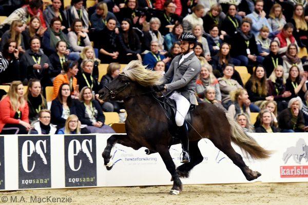 MCK3086 Gigur and Nils 5-gait stallion show 240218