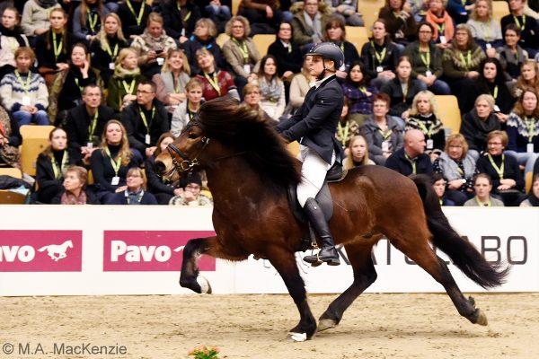 MCK3214 Jón and Veronika 5-gait stallion show 240218