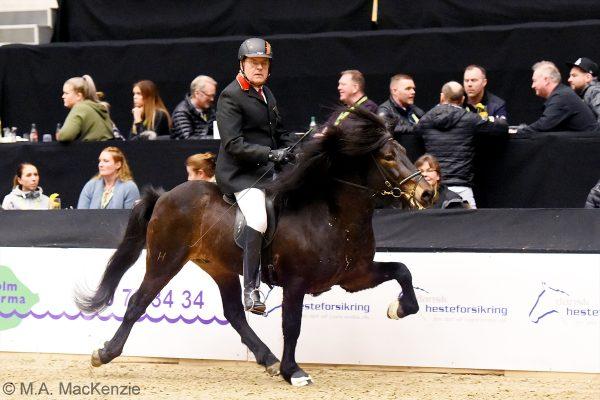 MCK3240 Starri and Uli 5-gait stallion show 240218