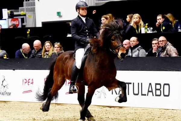 MCK3294 Jón and Veronika 5-gait stallion show 240218
