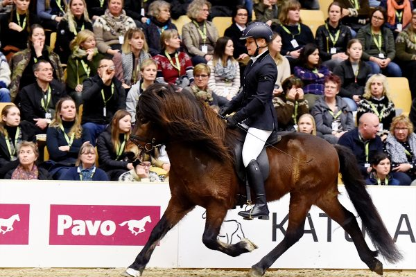 MCK3364 Jón and Veronika 5-gait stallion show 240218