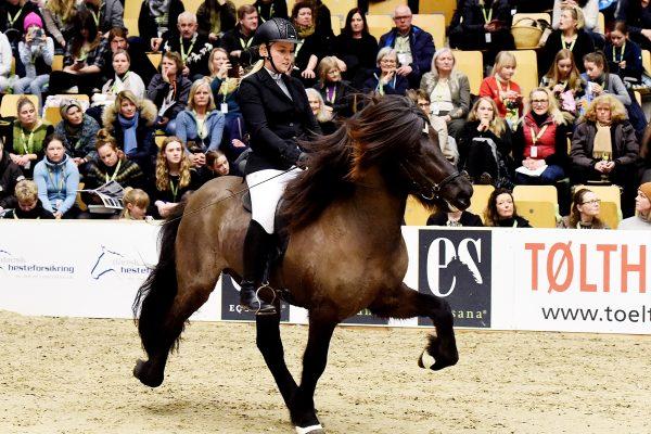 MCK3682 Styrmir and Emma 5-gait stallion show 240218