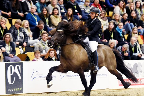 MCK3729 Styrmir and Emma 5-gait stallion show 240218