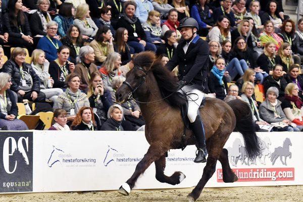 MCK3799 Oddaverji and Mads 5-gait stallion show 240218