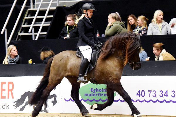 MCK3851 Styrmir and Emma 5-gait stallion show 240218
