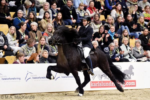 MCK3867 Sjóli and Anne Stine 5-gait stallion show 240218