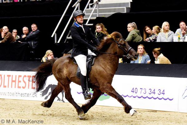 MCK3904 Oddaverji and Mads 5-gait stallion show 240218