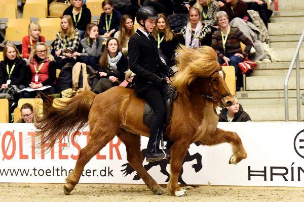 MCK4076 Emil in Gavnholt show WT240218