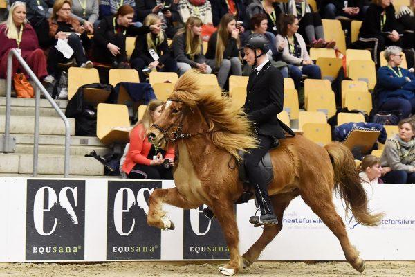 MCK4408 Emil in Gavnholt show WT240218