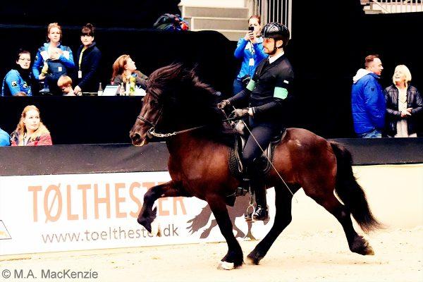 MCK7921 Pistill and Nils 4-gait stallion show 240218